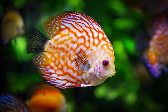 5 fish you should never eat and 5 fish you should eat