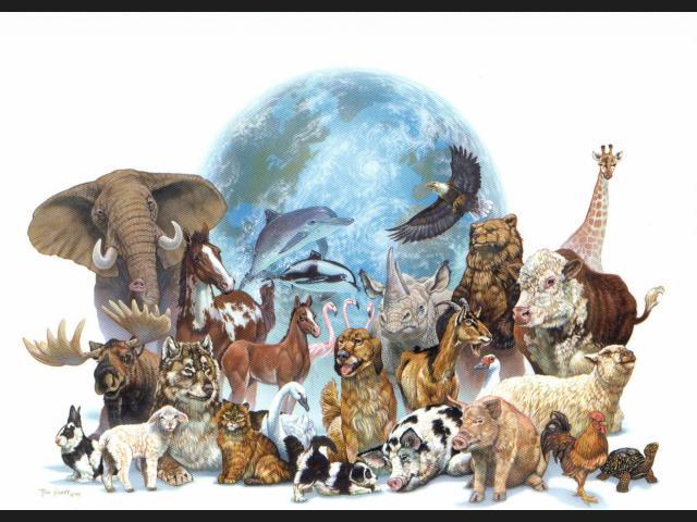 que son los animales