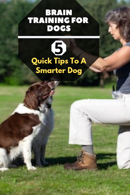Quick Tips to A Smarter Dog