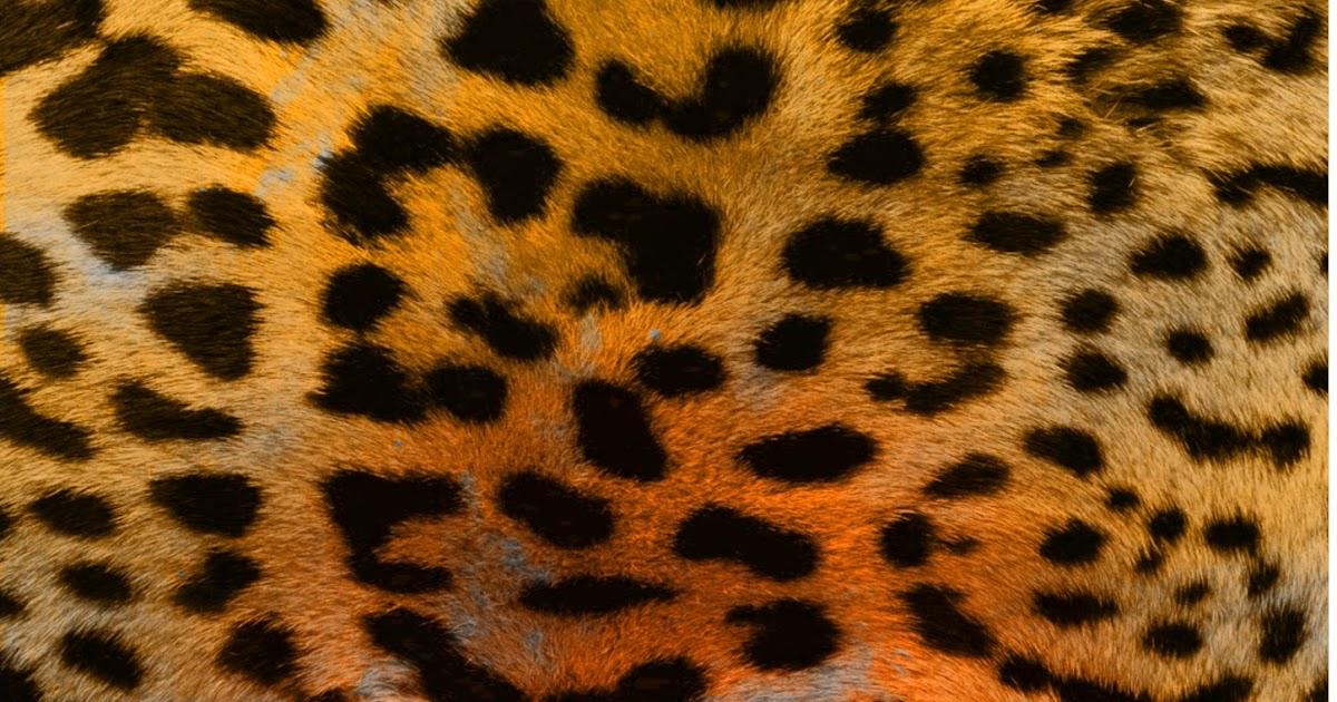 Leopard Print Arts And Crafts