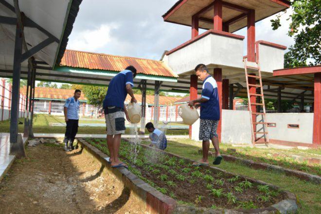 Kreatif, Lapas Watampone Manfaatkan lahan Sempit Untuk Pertanian Warga Binaan