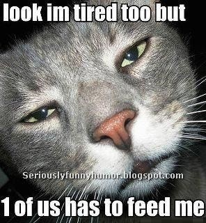 Cat says: Look I'm tired too, but 1 of us has to feed me.