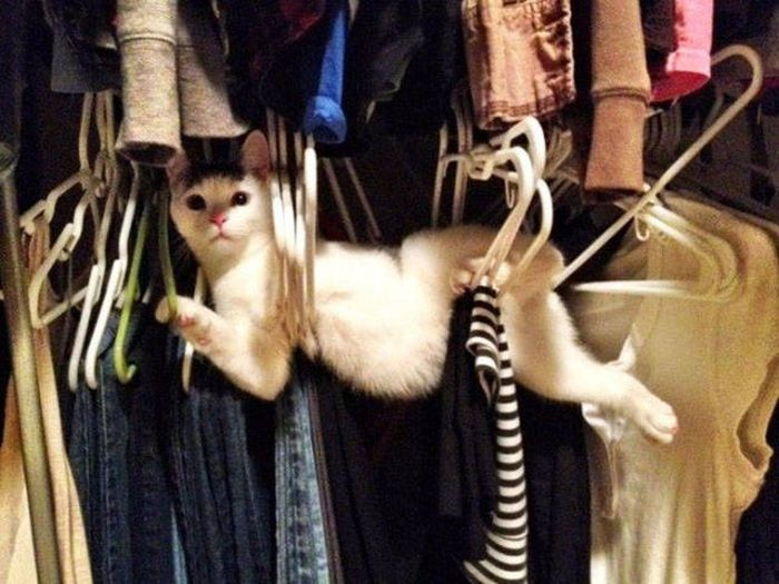 Funny cats - part 277, cute cat images, best funny cat pictures, cat photo