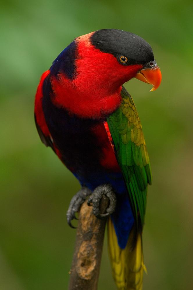 Life Around Us: Beautiful Colorful Birds