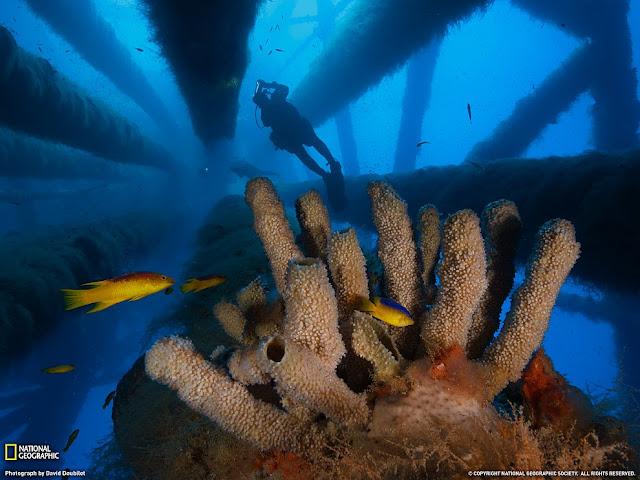 Underwater Reserve Flower Garden Banks, Gulf of Mexico
