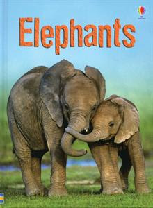science experiment elephant toothpaste preschool powol packets. Black Bedroom Furniture Sets. Home Design Ideas