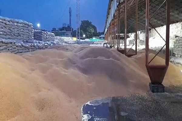 ballabhgarh-anaj-mandi-wheat-washed-away