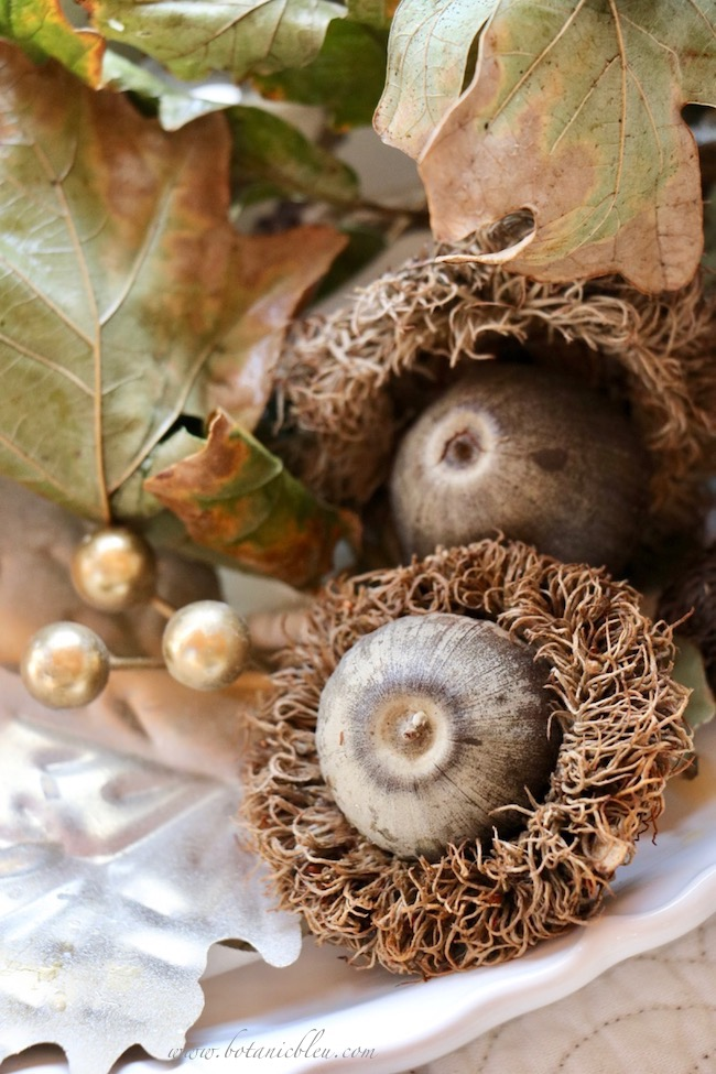 Thanksgiving Natural Centerpiece using leaves, twigs, and huge Bur Oak fringed acorns