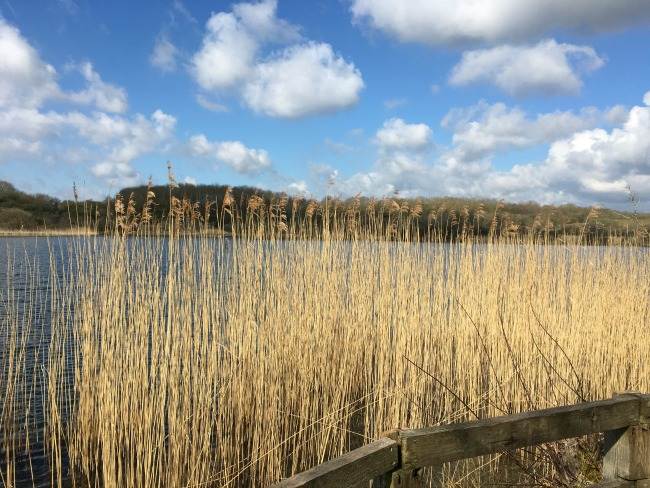 cosmeston-lakes