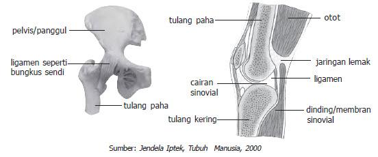 hubungan antar tulang