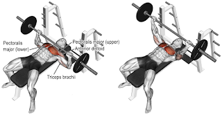 Top 5 Exercises To Build Chest, Barbell Bench Press