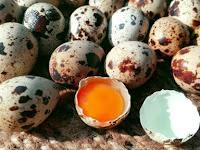 Fakta atau Mitos, Banyak Mengonsumsi Telur Puyuh Dapat Mengakibatkan Kolesterol?