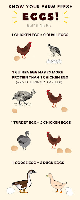 comparing egg laying poultry types
