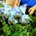 Coltivava e deteneva marijuana ai fini di spaccio: arrestato dai Carabinieri di Messina