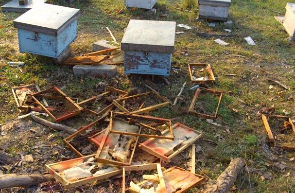 Θεσπρωτία: Αρκούδες στη Μουργκάνα καταστρέφουν, αναζητώντας τροφή, κυψέλες μελισσών