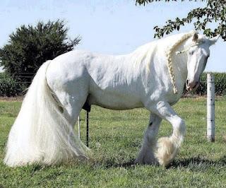 صور أحصنة