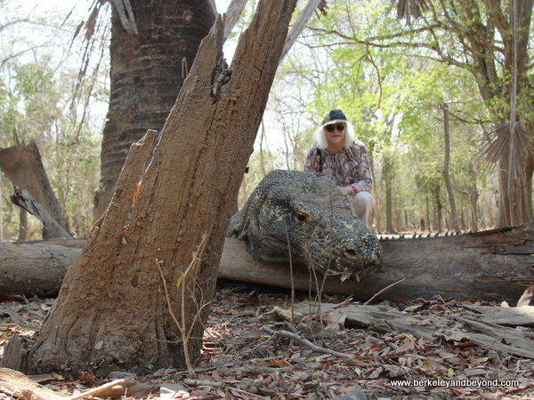 picture-taking with komodo dragon at Komodo Island in Indonesia