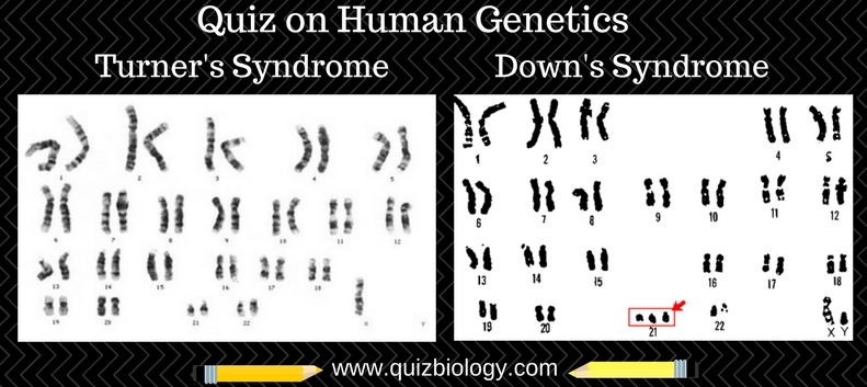 Quiz on Human Genetics