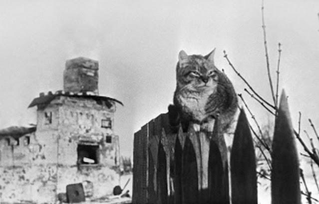 Кошка, уцелевшая в блокаду, уберегла от голодной гибели нашу семью