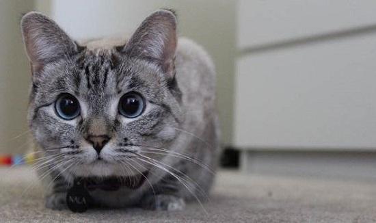 kucing paling populer dan terkenal di internet