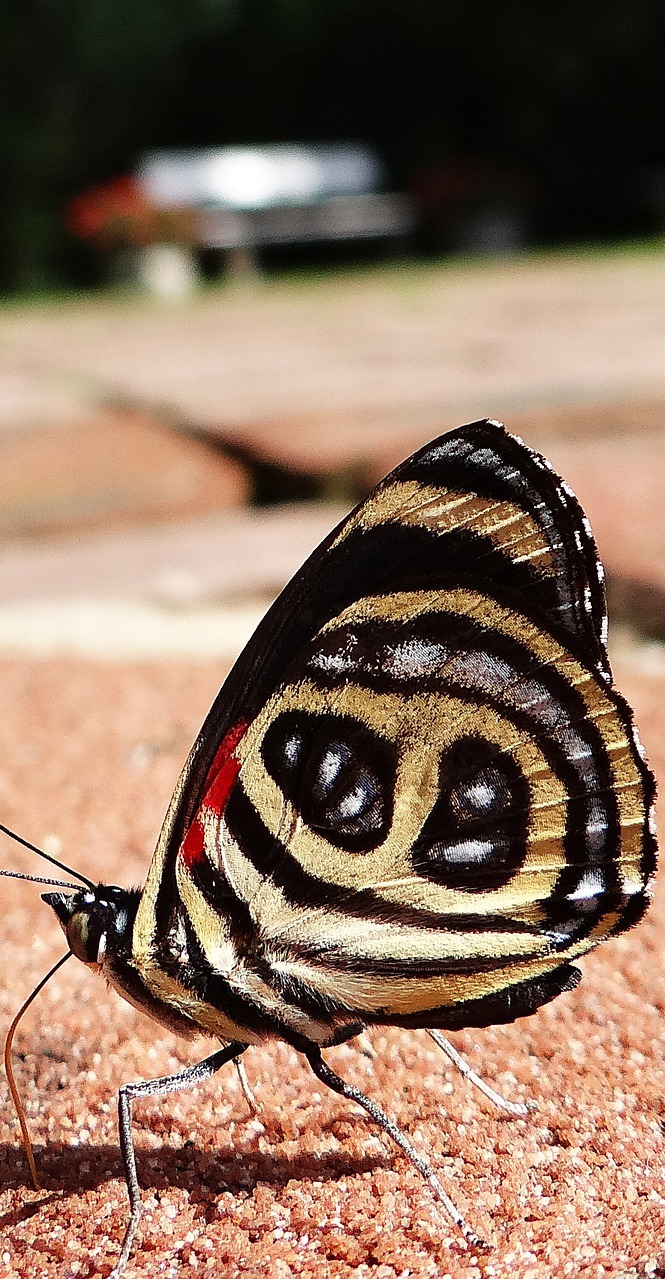 A butterfly with a beautiful pattern.