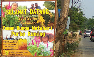 taman bunga matahari pasar kemis