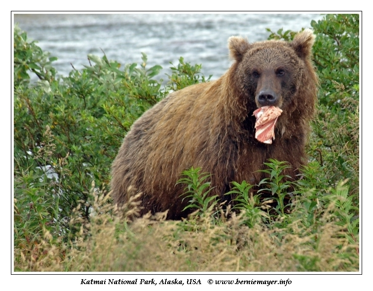Reisebericht Alaska Woche 2