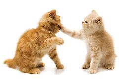 Cara Membuat Kucing Jadi Akrab dan Tidak Berkelahi
