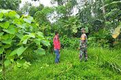 Babinsa Melaksanakan Patroli Dan Sosialisasi Pencegahan Karhutlah Di Desa Binaan