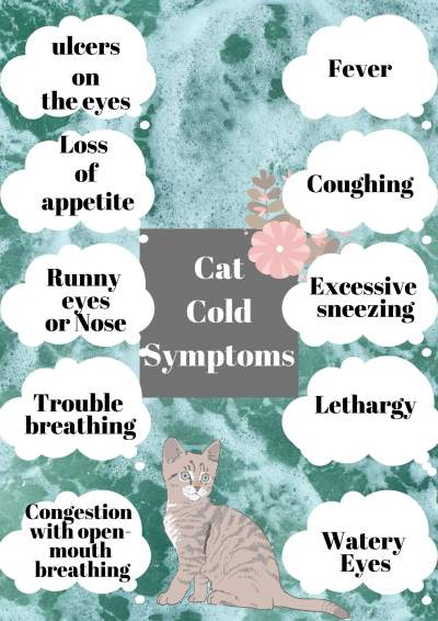 cat with cold symptoms