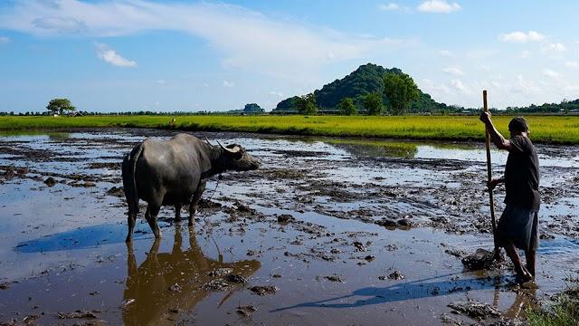 Ha Tien, a city of green fields