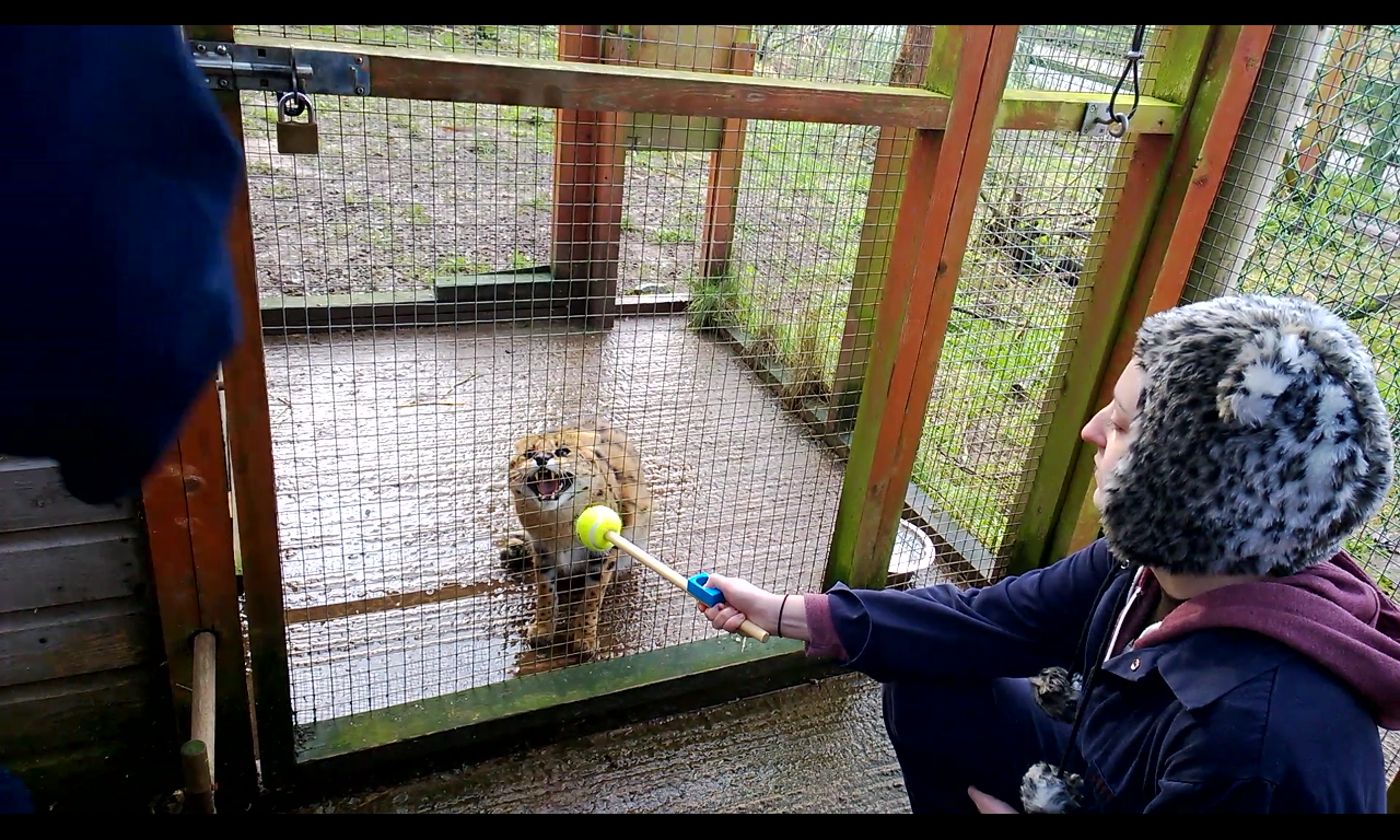 Diary Of A Zoo Keeper Update Who Am I