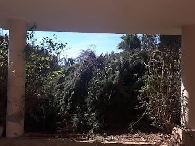 Limpieza de jardín en vivienda abandonada y retirada de residuos