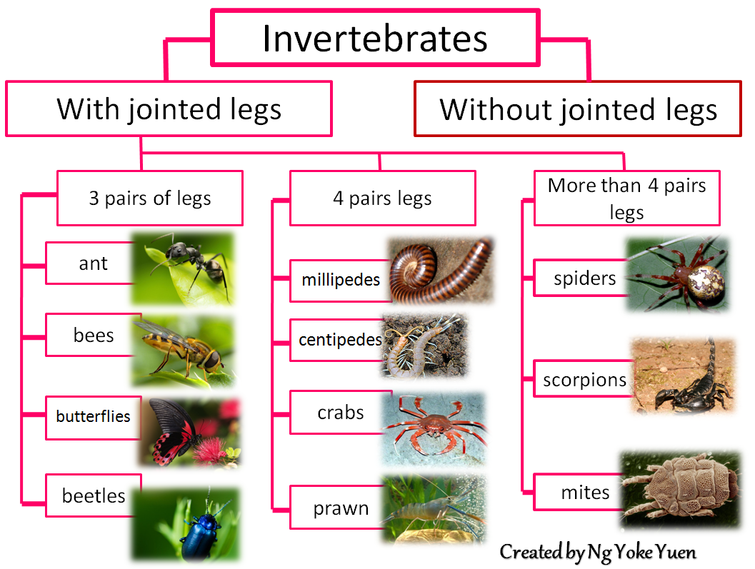 Animal Classification Invertebrates Pictures To Pin On