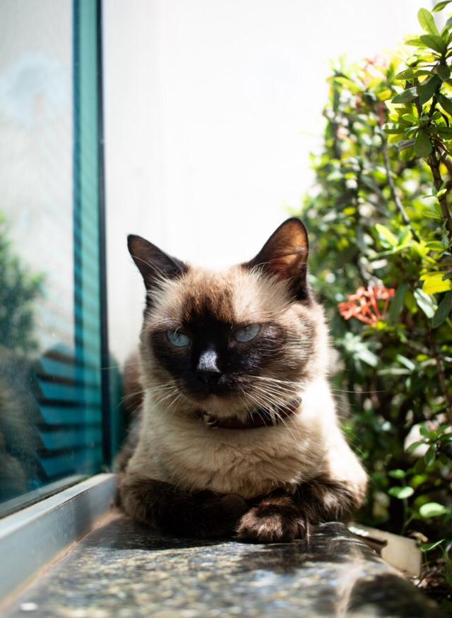 Adote um gatinho, A velhice de um gato, adote um gato adulto, adote um gato idoso, gato senil, Gatos idosos, comunicat.pet comunicatoficial