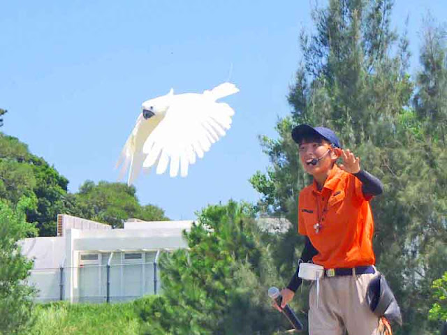 birds, Neo Park, Nago, Okinawa, show