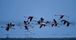 भयावह तरीके से गिर रही पक्षियों की तादाद