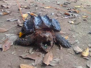 cara-memandikan-kura-kura-ast.jpg