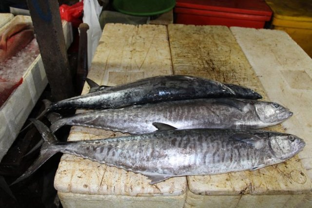 Daftar Harga Ikan Tenggiri Konsumsi Terbaru dan Manfaatnya