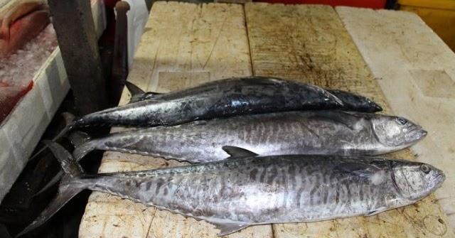 Daftar Harga Ikan Tenggiri Konsumsi Terbaru Dan Manfaatnya Ikanesia Id