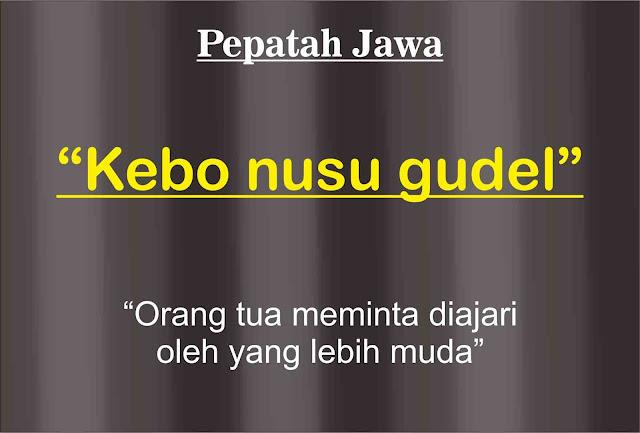 Pepatah-jawa-KEBO-NUSU-GUDEL