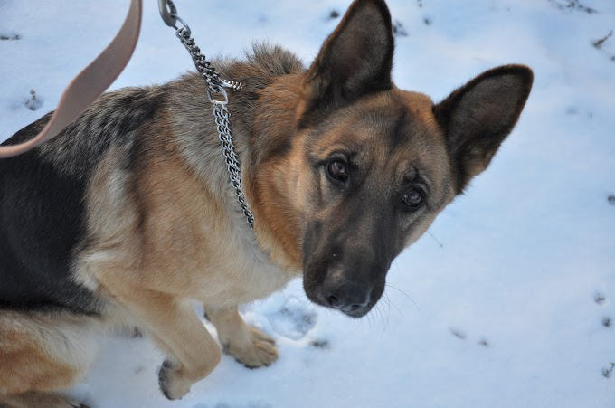 Dog Training Collars – How to Use Them