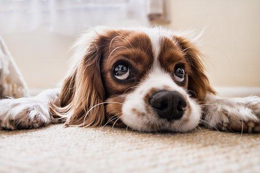 Stress Dog Image