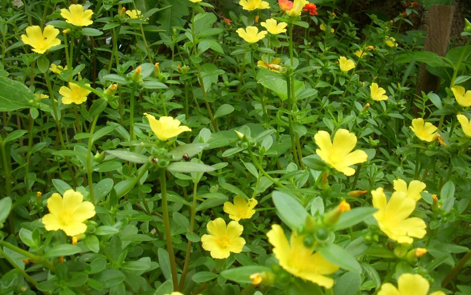 Plantas crasas o suculentas tipos cuidados y usos for Jardineria y plantas