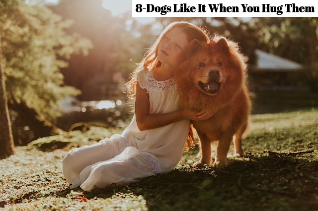 Teach your children how to interact with dogs properly. Encourage your children to reach out their hands to allow a dog to sniff it. If the dog turns away, your children should, too. If the dog sniffs their hand calmly, show your children the appropriate way to stroke and pet them, but enforce absolutely no hugs!