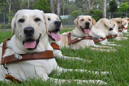 Guide Dogs Nsw Logo