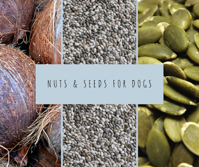 Raw, fresh seeds and nuts for dogs