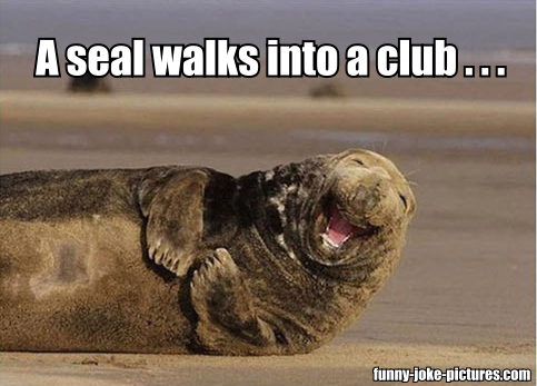 A seal walks into a club