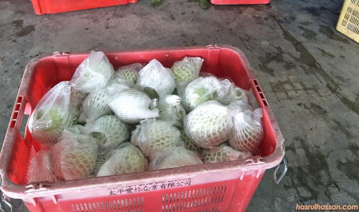Borong Buah Jambu Batu Lohan dari Ladang Trong, berdekatan Taiping