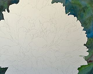 White Peony Watercolor Painting – Work in Progress WIP